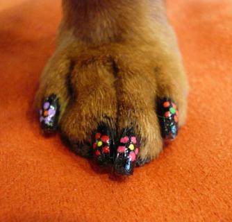 The Art Of Japanese Dog Manicure Stylish New Look